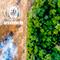 Mercados de Carbono: Compensación de Emisiones